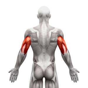 Bodyweight Triceps Exercise