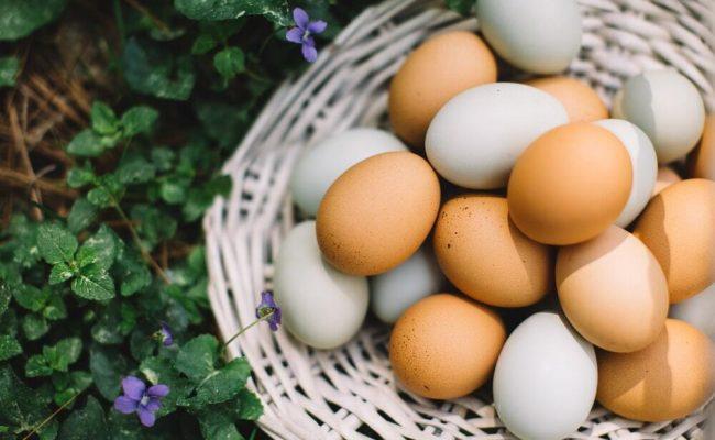 Egg-1